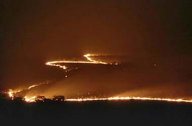 plan curupira reflorestation amazonie taygra